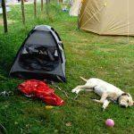 Campings que admiten mascotas en Asturias