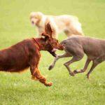 Vacaciones con mascotas: top 10 casas rurales que admiten perros en Asturias