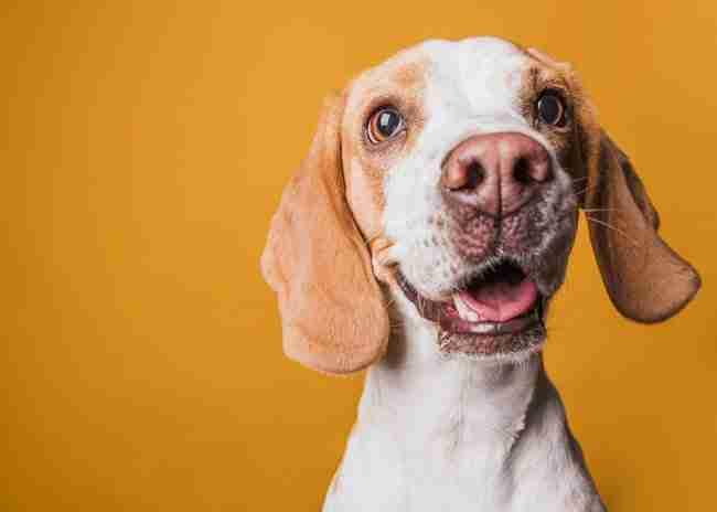 perros-en-asturias-seguros -mascotas