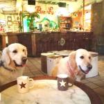 Tomar algo con nuestras mascotas: bares para perros en Asturias