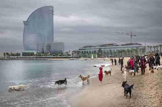 Turismo con perros en Barcelona
