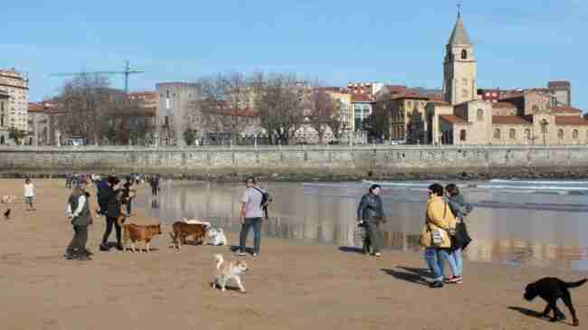 Turismo con perros en Gijón