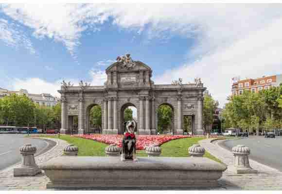 Turismo con perros en Madrid
