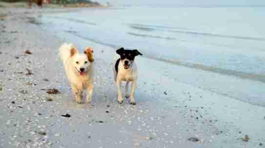 Turismo con perros en Málaga