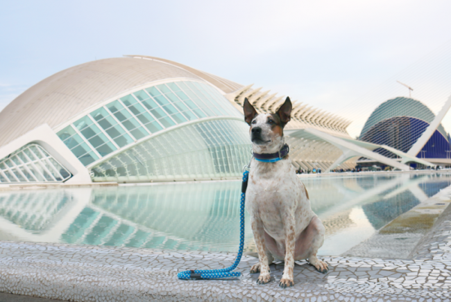 Turismo con perros en Valencia