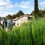 Bienvenidas mascotas: turismo rural con perros en Asturias