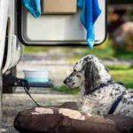 viajar con perro en la autocaravana