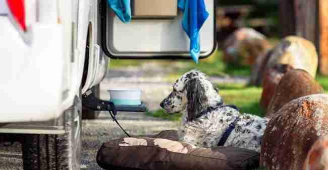 Accesorios Para Viajar Con El Perro En Autocaravana Vicente Velasco Correduría De Seguros