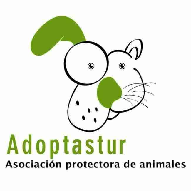 adoptastur donde adoptar perros en Asturias Vicente velasco