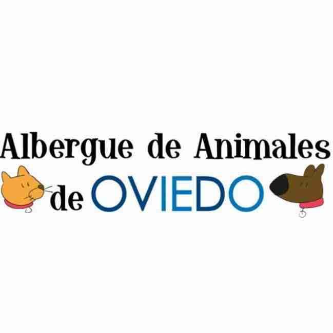Albergue de animales de oviedo donde adoptar perros en Asturias Vicente velasco