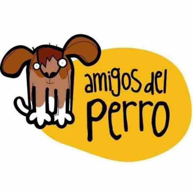 Amigos del perro donde adoptar perros en Asturias Vicente velasco